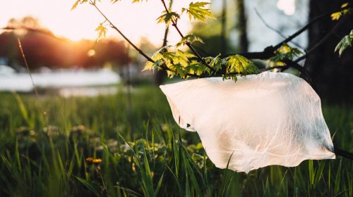 pexels photo 1141835 500x280 - How Plastic Bags Affect Our Lives
